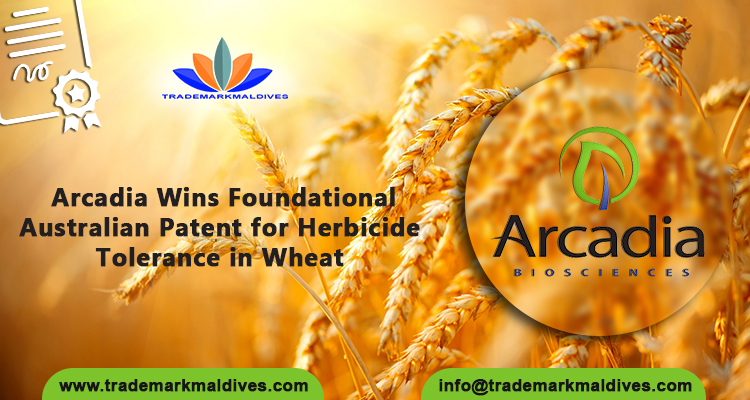 Arcadia Wins Foundational Australian Patent for Herbicide Tolerance in Wheat